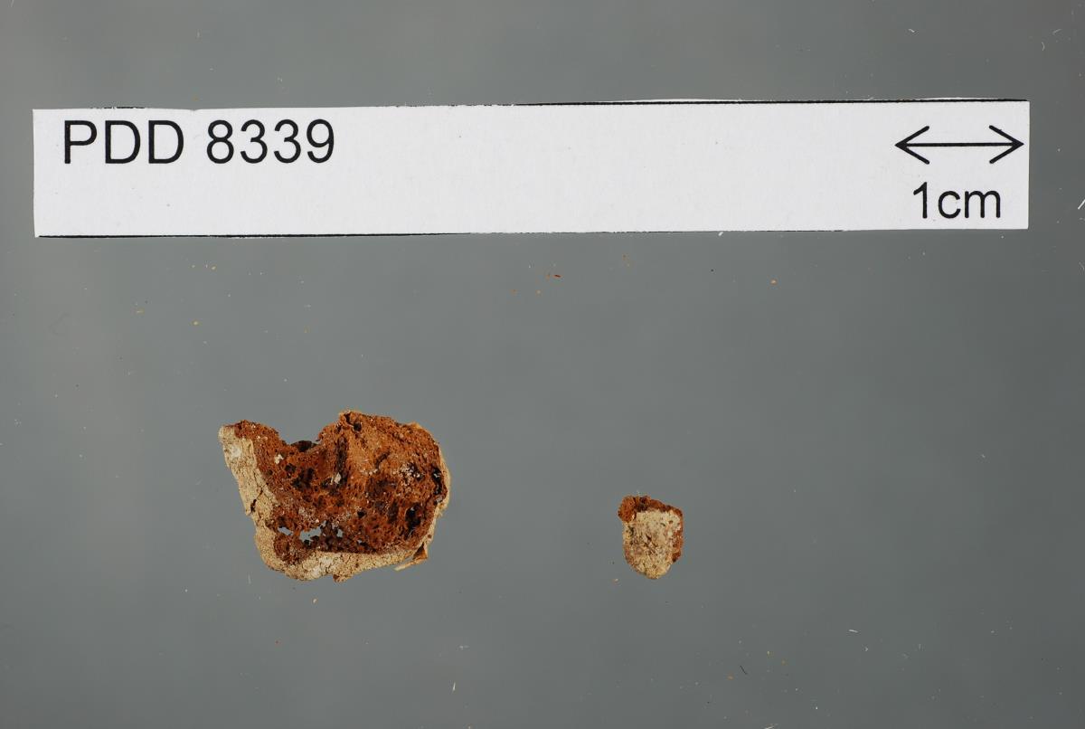 Gymnoglossum fulvum image