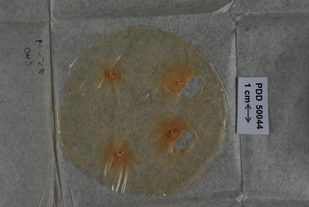 Bionectria aureofulvella image