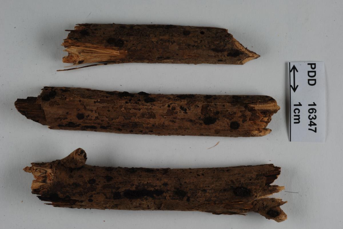 Image of Hypoxylon subrutiloides