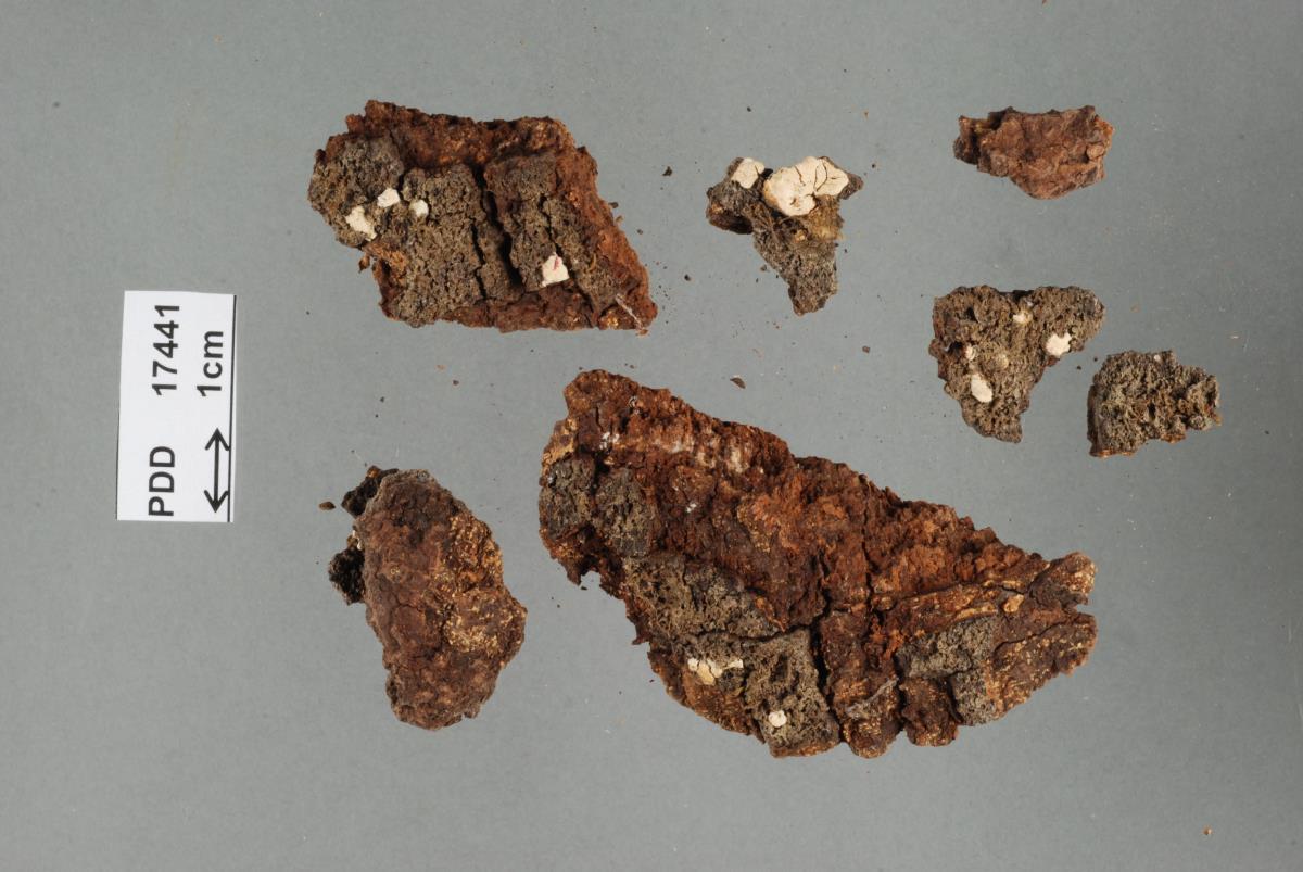 Image of Dendrothele pulvinata