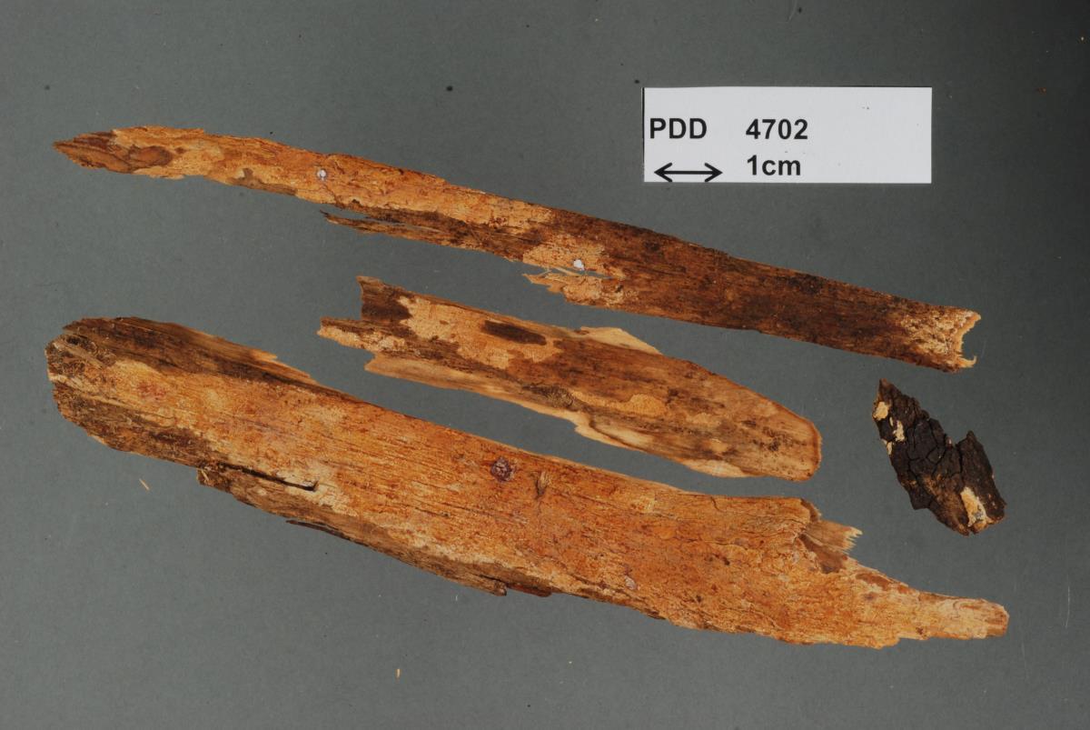Image of Corticium bullatum