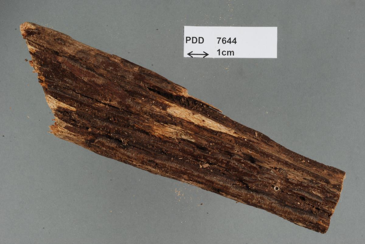 Image of Hymenochaete dissimilis