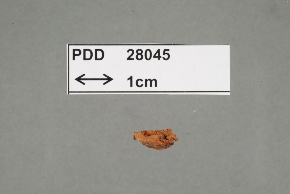 Image of Poria atrovinosa