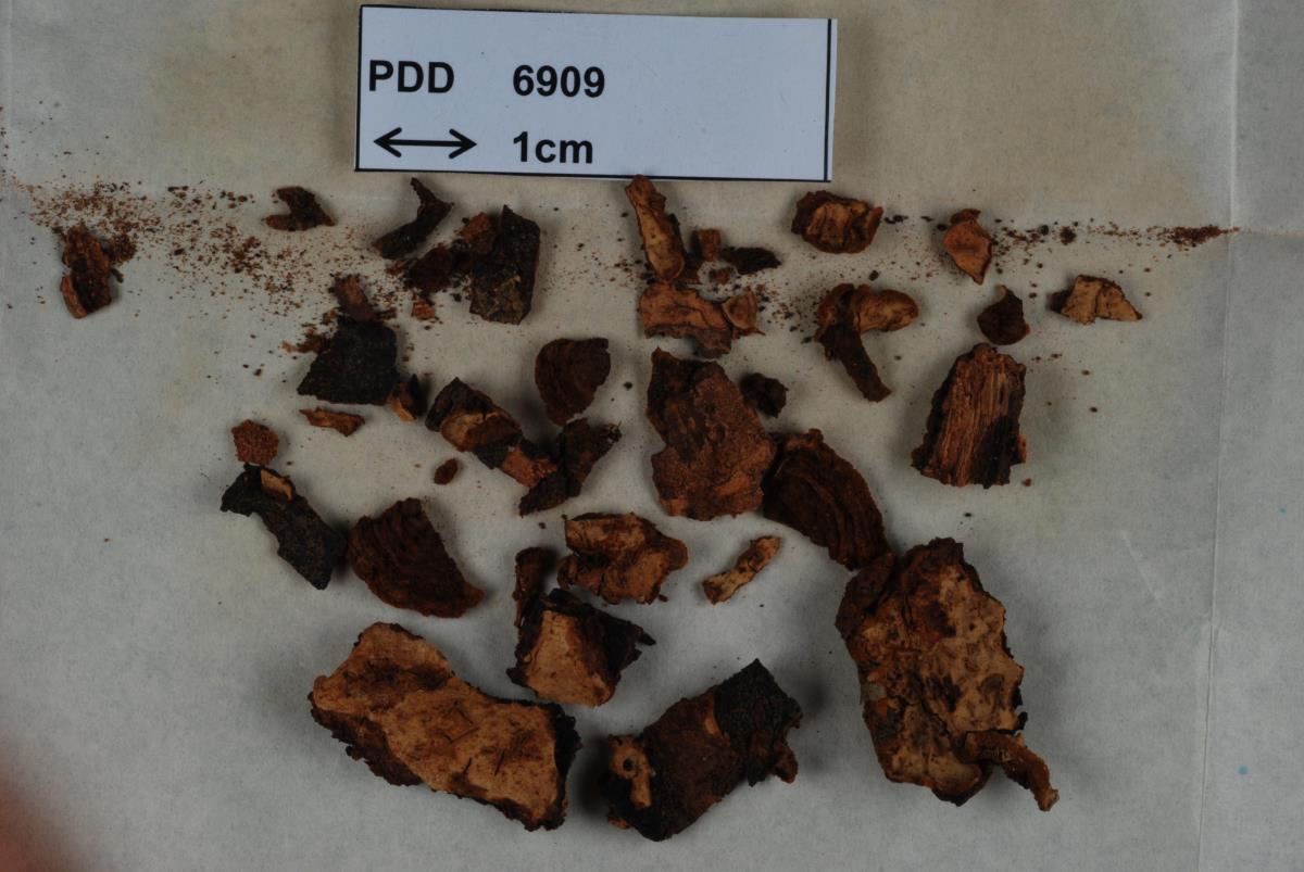 Image of Stereum aotearoa