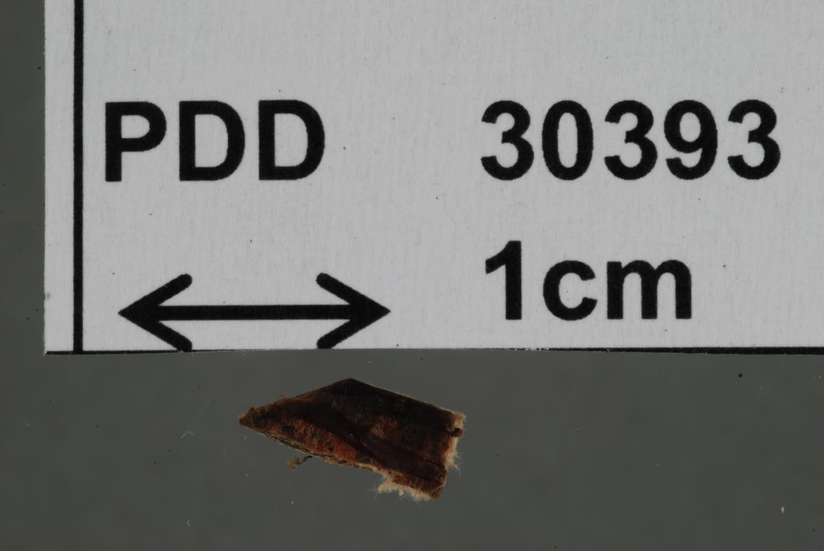 Seismosarca hydrophora image